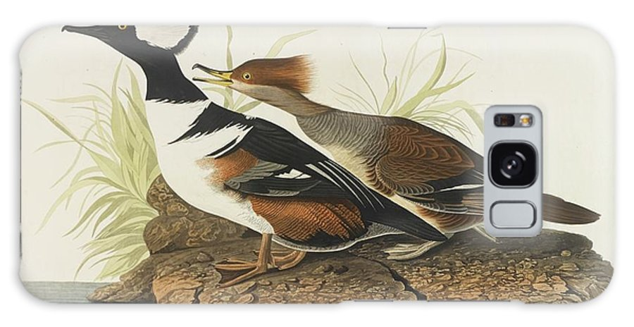 John James Audubon (after) Hooded Merganser (plate Ccxxxii) Galaxy S8 Case featuring the painting Hooded Merganser by MotionAge Designs