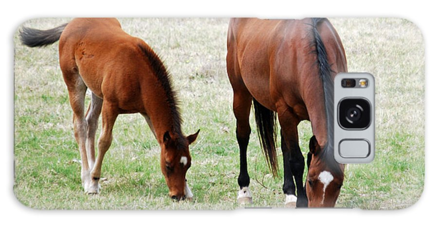 Teresa Blanton Galaxy S8 Case featuring the photograph Horse And Colt by Teresa Blanton