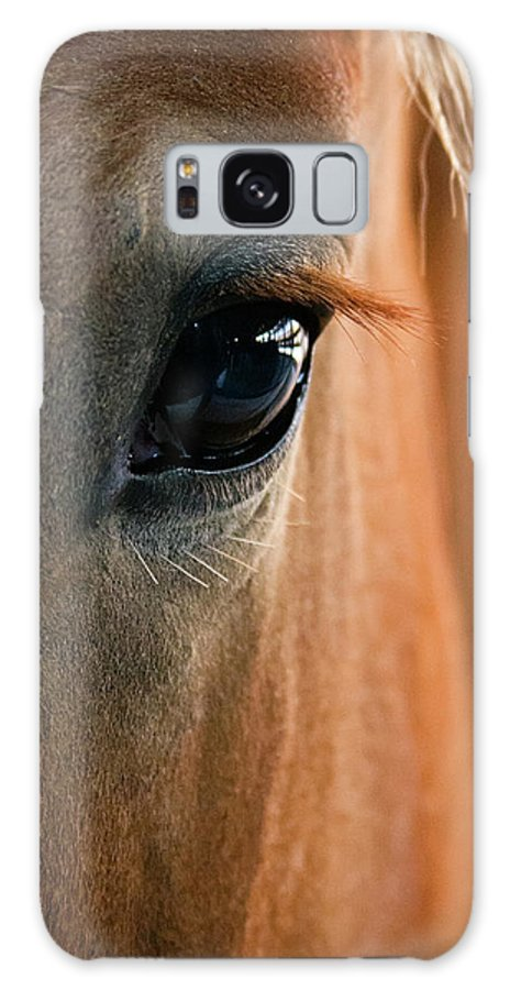 3scape Photos Galaxy S8 Case featuring the photograph Horse Eye by Adam Romanowicz