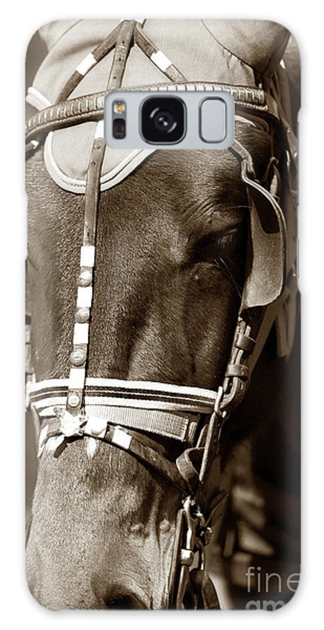 Horse Face Galaxy S8 Case featuring the photograph Horse Face by John Rizzuto