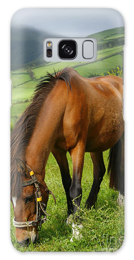 Animals Galaxy Case featuring the photograph Horse Grazing by Gaspar Avila