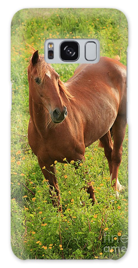 Animals Galaxy Case featuring the photograph Horse In A Field With Flowers by Gaspar Avila