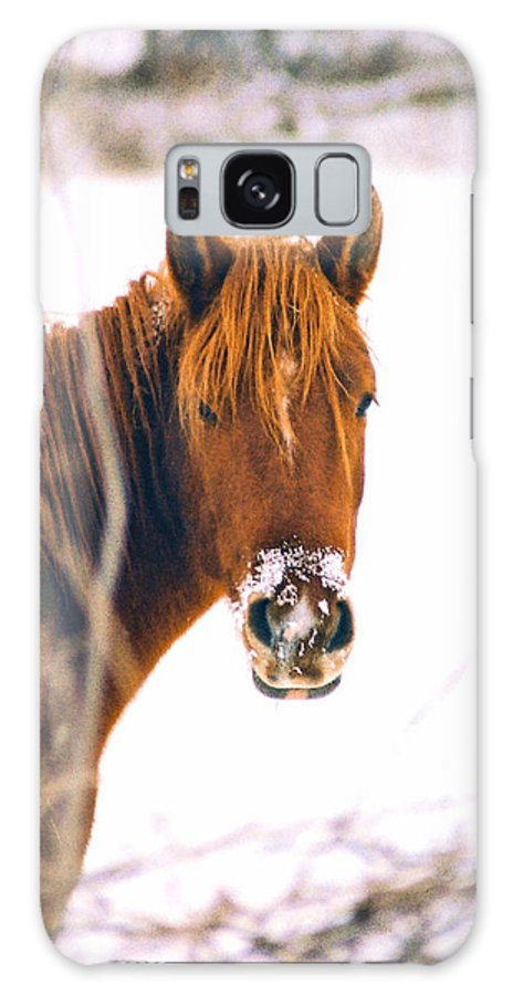 Horse Galaxy Case featuring the photograph Horse In Winter by Steve Karol