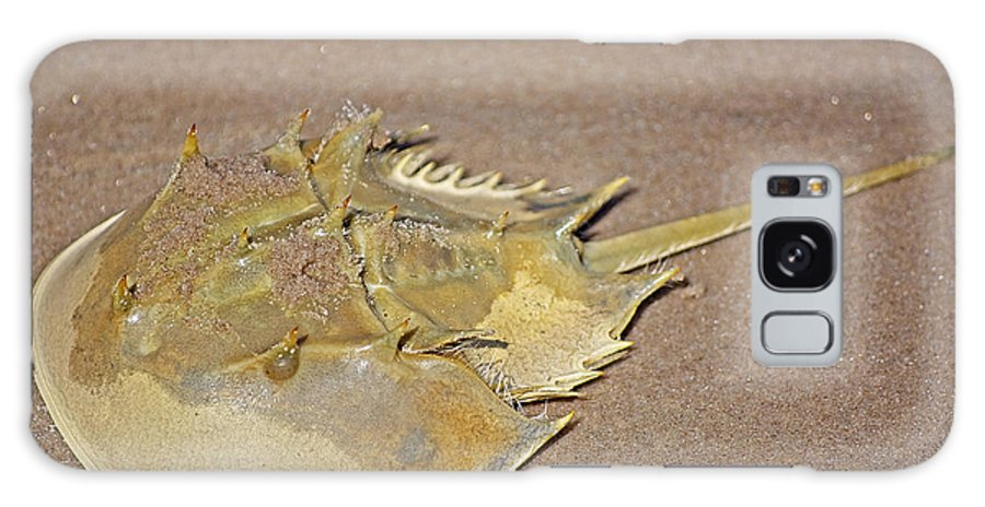 Crab Galaxy S8 Case featuring the photograph Horseshoe Crab by Kenneth Albin