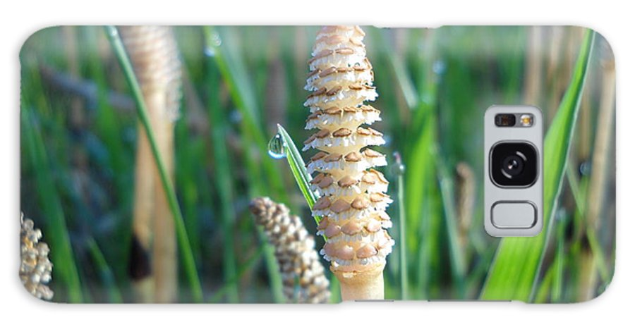 Dew Drops Galaxy S8 Case featuring the photograph Horsetails And Dew Drops by Kent Lorentzen
