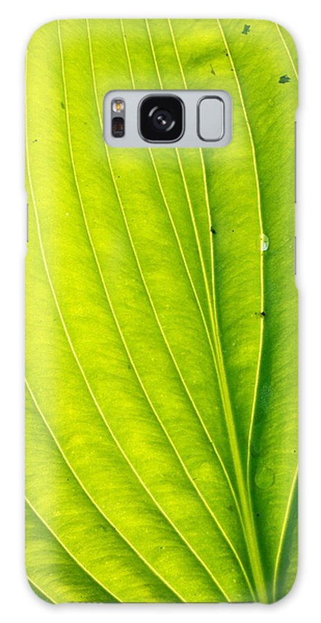 Landscape Galaxy S8 Case featuring the photograph Hosta Leaf by Amanda Kiplinger