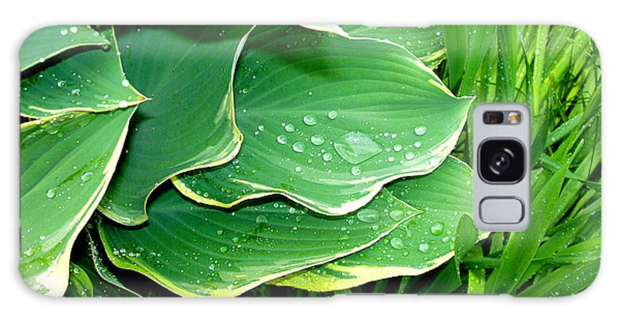 Hostas Galaxy Case featuring the photograph Hosta Leaves And Waterdrops by Nancy Mueller