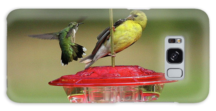 Bird Galaxy S8 Case featuring the photograph Hummer Vs. Finch 2 by Lou Ford
