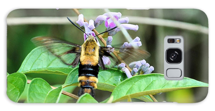 Floral Galaxy S8 Case featuring the photograph Hummingbird Bee by Jan Amiss Photography