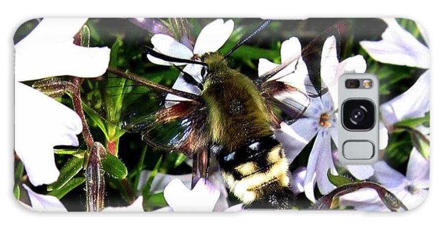 Hummingbird Moth Galaxy S8 Case featuring the photograph Hummingbird Moth by Will Borden