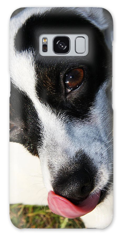 Pet Galaxy S8 Case featuring the photograph Hungry Dog by Jorgo Photography - Wall Art Gallery