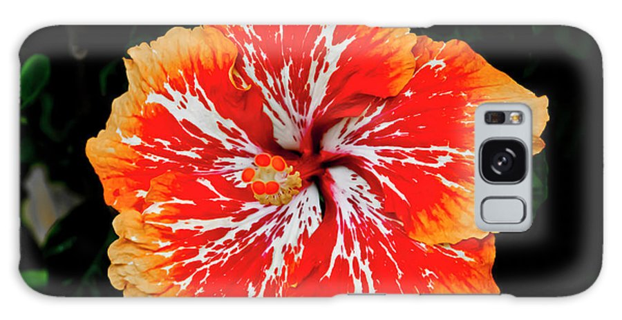 Flower Galaxy S8 Case featuring the photograph Hybrid Hibiscus II Maui Hawaii by Jim Cazel