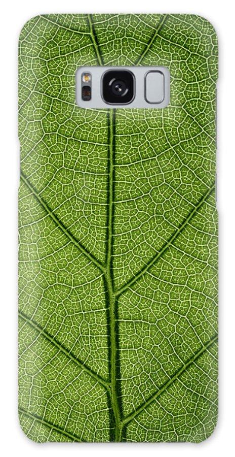 Gadomski Galaxy S8 Case featuring the photograph Hydrangea Leaf by Steve Gadomski