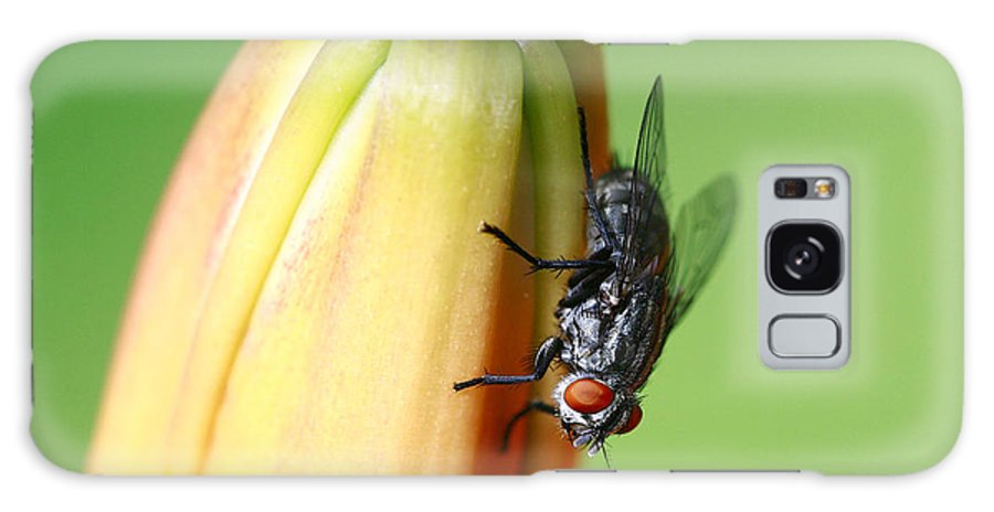 Macro. Fly Galaxy S8 Case featuring the photograph I Like Flowers by Deborah Benoit