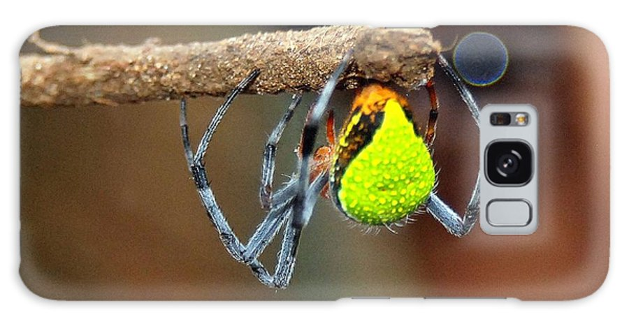 Spiders Galaxy S8 Case featuring the photograph I See You Spider by Kathryn Colvig