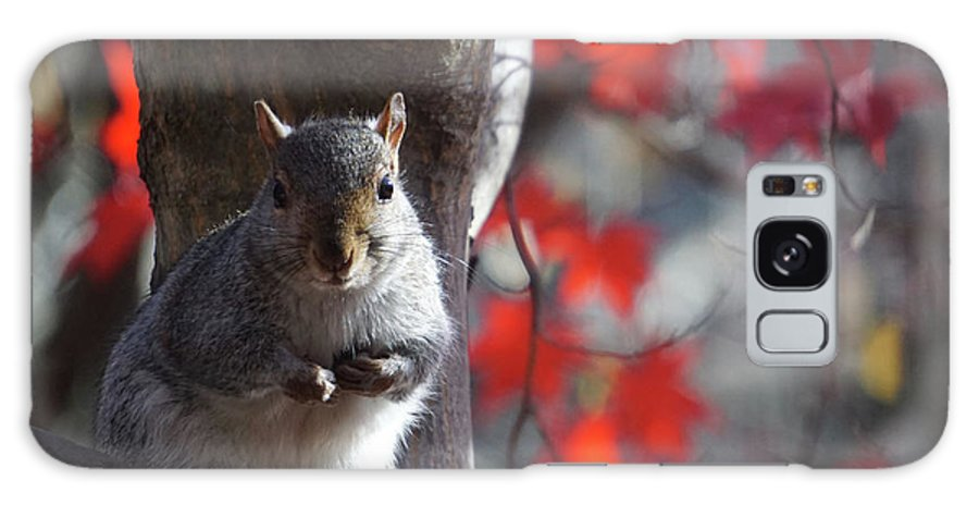 Gray Squirrel Galaxy S8 Case featuring the photograph I See You Too by Barbara Swinton