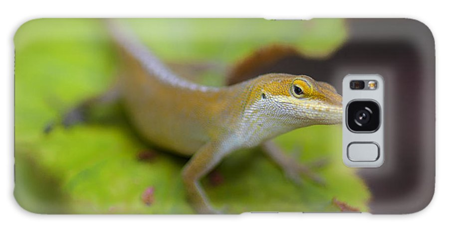 Botanical Gardens Lizard Animals Reptile Insects Leafy Leaf Plants Flowers Galaxy S8 Case featuring the photograph Lloyd's Lookin' At You by Scott Rogers