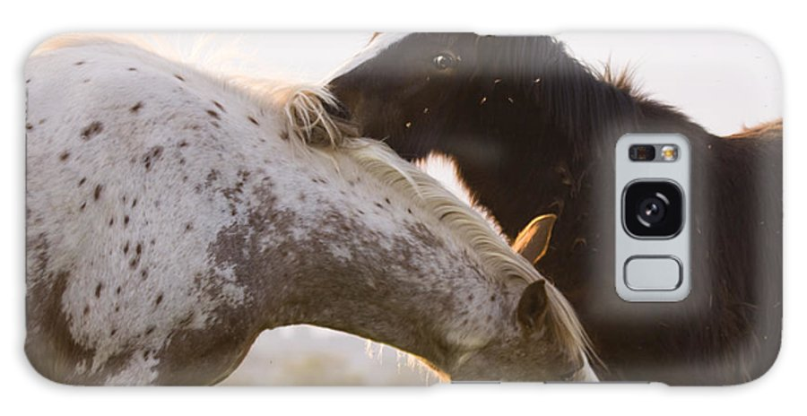 Horse Galaxy S8 Case featuring the photograph I Will Scratch You And You Will Scratch Me by Angel Ciesniarska