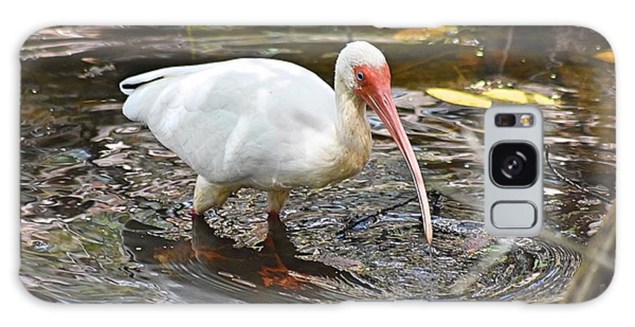 Ibis Galaxy S8 Case featuring the photograph Ibis At Corkscrew Swamp by Lisa Clark