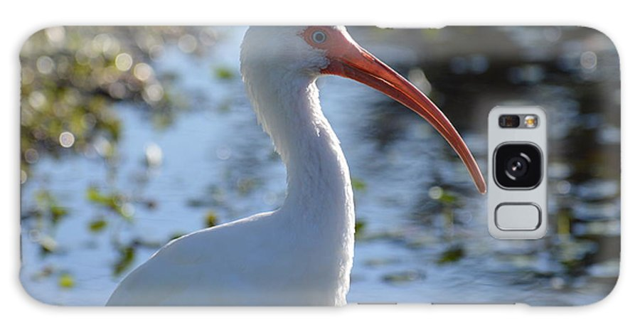 Galaxy S8 Case featuring the photograph Ibis Blanco by Lenin Caraballo