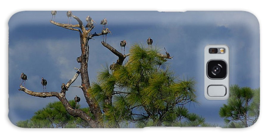Ibis Galaxy S8 Case featuring the photograph Ibis In The Pines - Debbie May by Debbie May