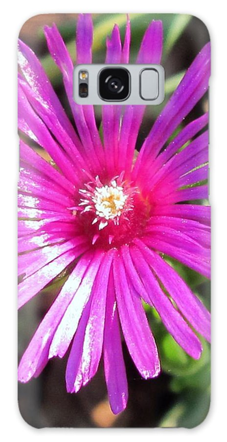 Flower Galaxy S8 Case featuring the photograph Ice Plant by Nancy Craig
