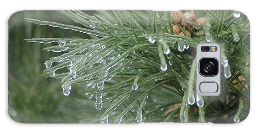 Nature Galaxy S8 Case featuring the photograph Iced Pine by Kathy Schumann