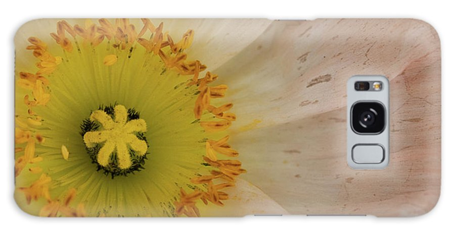 Icelandic Poppies Galaxy S8 Case featuring the photograph Icelandic Poppy by Roger Mullenhour