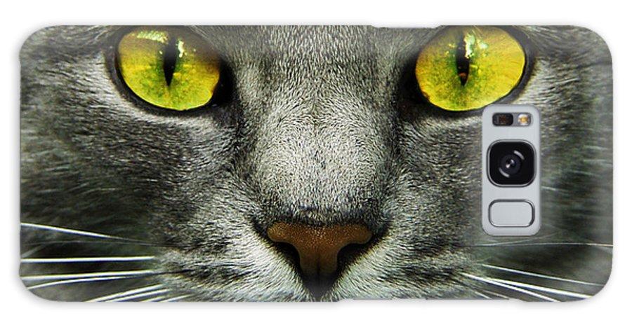 Cats Galaxy S8 Case featuring the photograph I.c.u. by Joachim G Pinkawa
