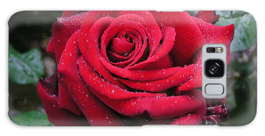 Rose Galaxy S8 Case featuring the photograph Icy Rose by Louise Magno