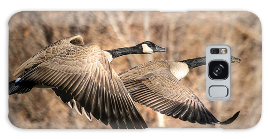 Canada Goose Galaxy S8 Case featuring the photograph I'm Right Behind Ya by Donna Kennedy