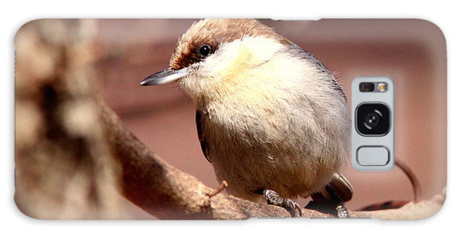 Brown-headed Nuthatch Galaxy S8 Case featuring the photograph Img_0001 Brown-headed Nuthatch by Travis Truelove