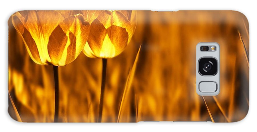 Tulips Galaxy Case featuring the photograph In A Perfect World by Jacky Gerritsen