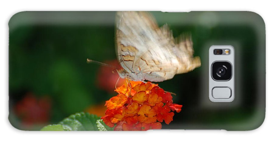 Butterfly Galaxy S8 Case featuring the photograph In Living Color by Rob Hans