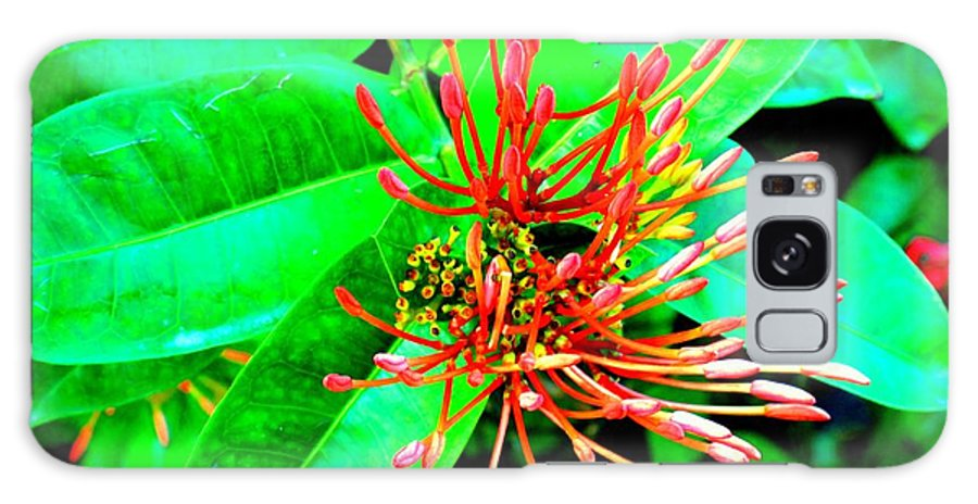 Flower Galaxy Case featuring the photograph In My Garden by Ian MacDonald