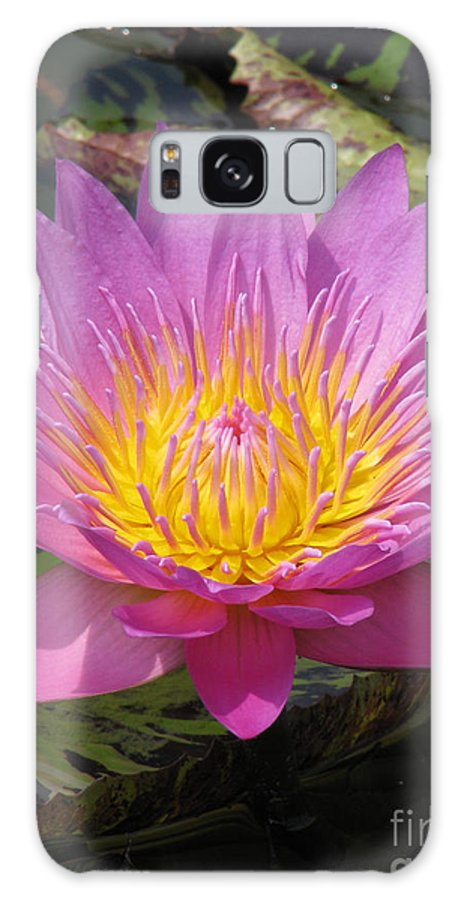 Lotus Galaxy S8 Case featuring the photograph In Position by Amanda Barcon