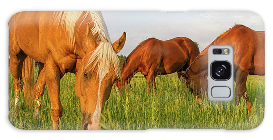 Quarter Horse Galaxy Case featuring the photograph In The Grass by Alana Thrower