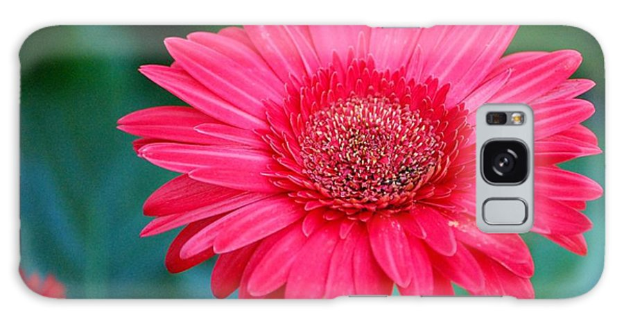 Gerber Daisy Galaxy S8 Case featuring the photograph In The Pink by Debbi Granruth