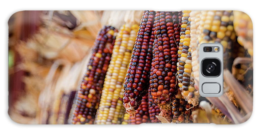 Galaxy S8 Case featuring the photograph Indian Corn 6 by Andrea Anderegg
