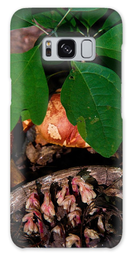 Cove Galaxy S8 Case featuring the photograph Indian Pipe 7 by Douglas Barnett