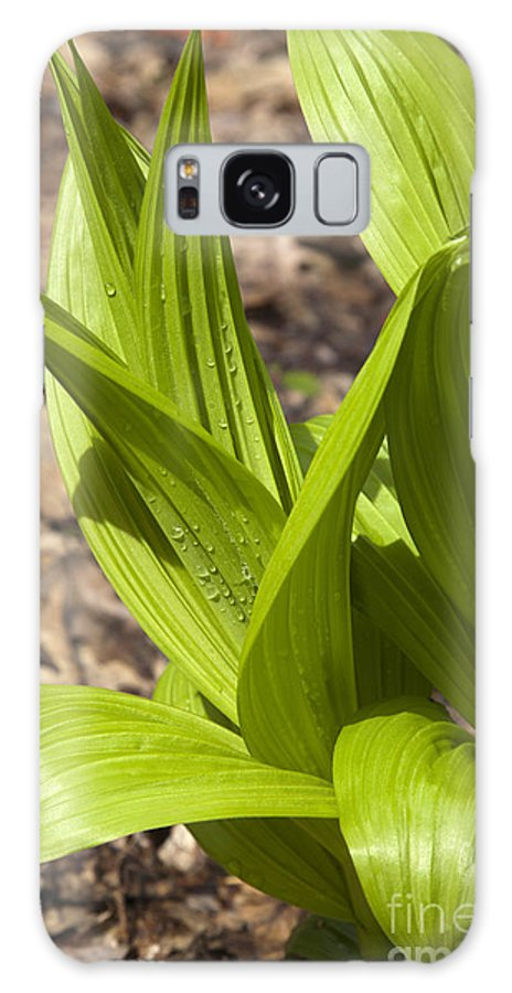 Scenic Galaxy S8 Case featuring the photograph Indian Poke -veratrum Veride- by Erin Paul Donovan