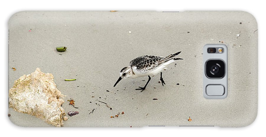 Sandpiper Galaxy S8 Case featuring the photograph Injured Sandpiper by William Tasker