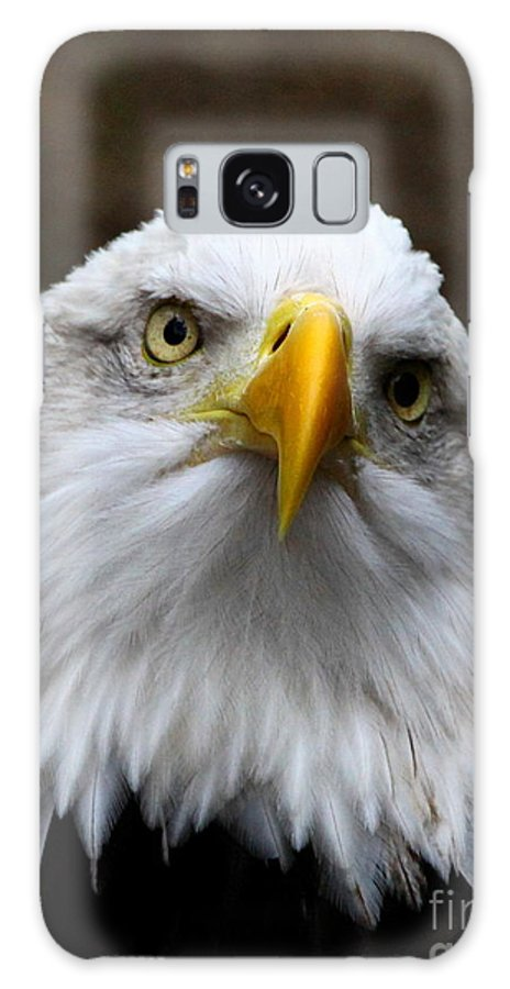 American Bald Eagle Galaxy S8 Case featuring the photograph Inquisitive Eagle by Barbara Bowen