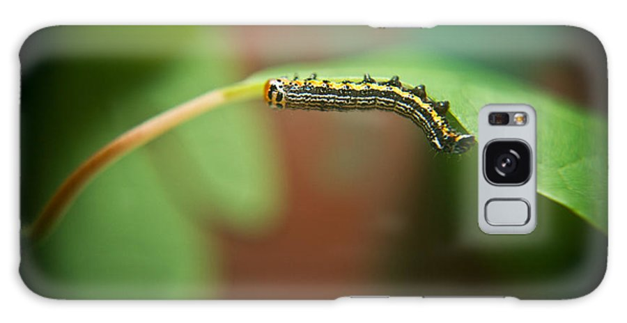 Cove Galaxy S8 Case featuring the photograph Insect Larva 4 by Douglas Barnett