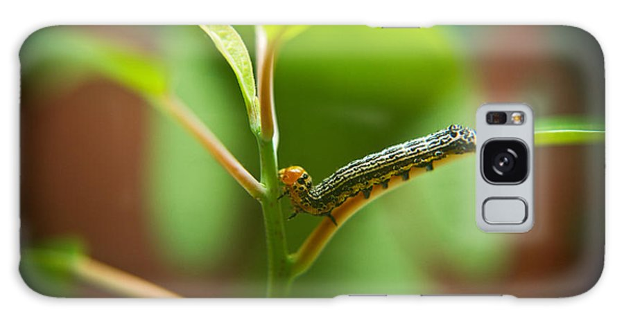 Cove Galaxy S8 Case featuring the photograph Insect Larva 5 by Douglas Barnett