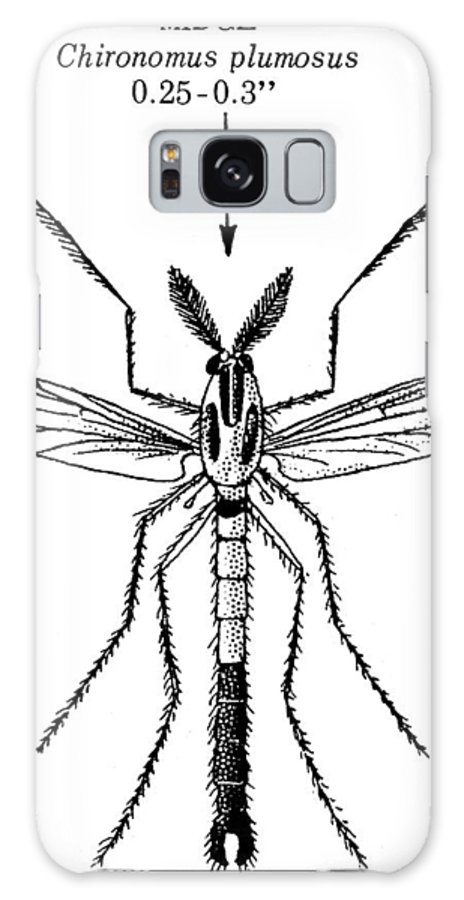 Animal Galaxy S8 Case featuring the photograph Insect: Midge by Granger