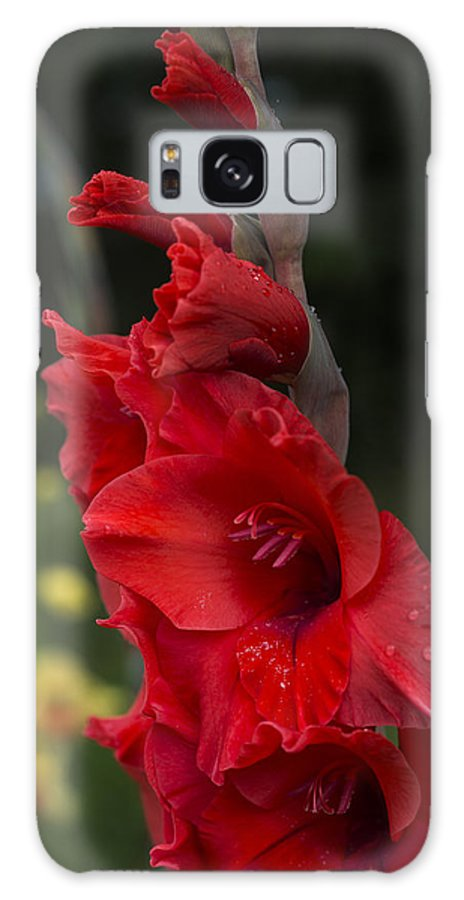 Astoria Galaxy S8 Case featuring the photograph Intensely Glad by Robert Potts