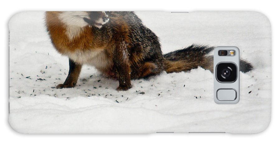Fox Galaxy S8 Case featuring the photograph Intent Red Fox by Douglas Barnett