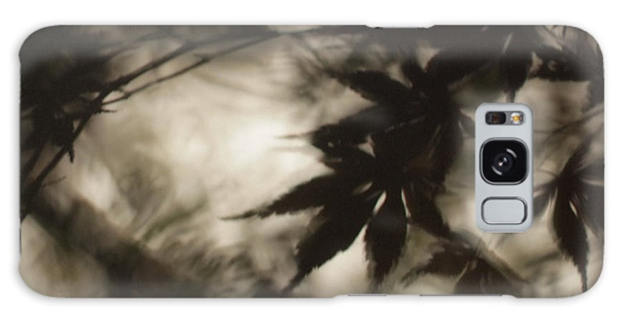 Leaves. Leaf Galaxy S8 Case featuring the photograph Into Haze by Gary Bartoloni