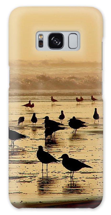 Iquique Galaxy S8 Case featuring the photograph Iquique Chile Seagulls by Brett Winn